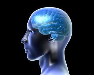 mozg 300x239 Neuroplasticity